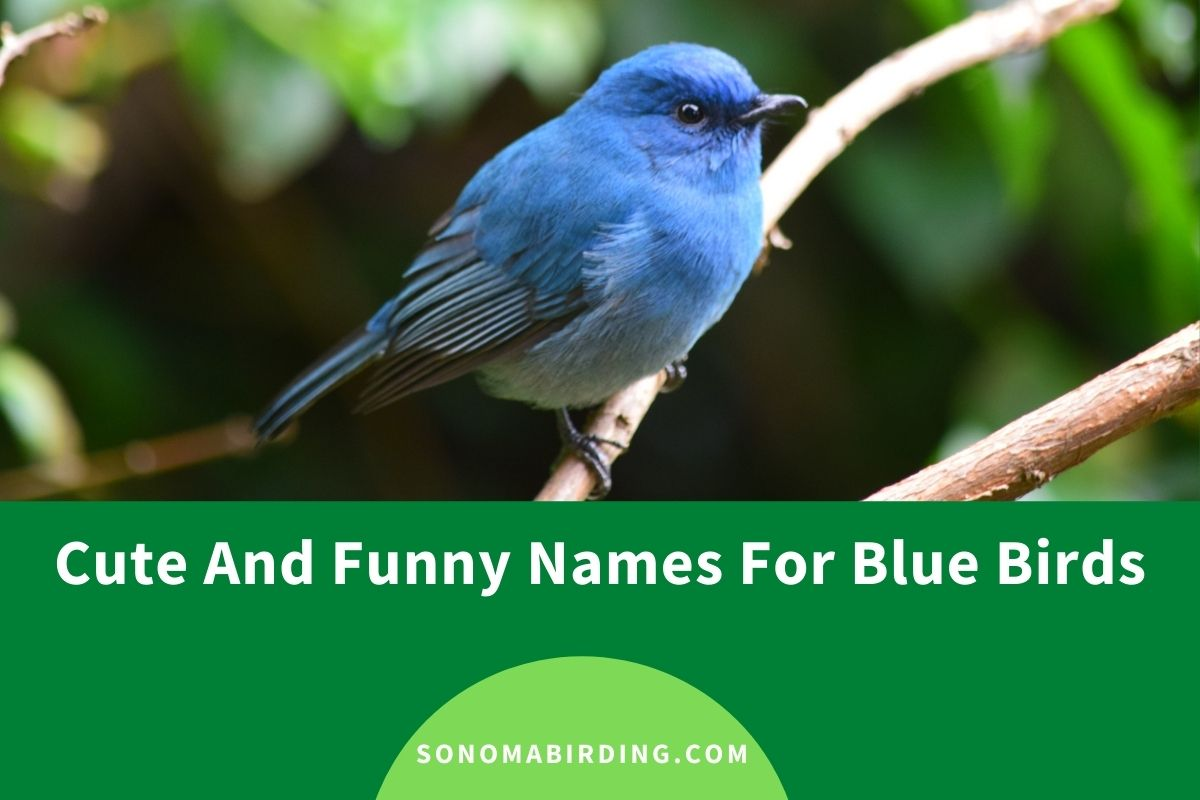 Cute and Funny Blue Bird Names