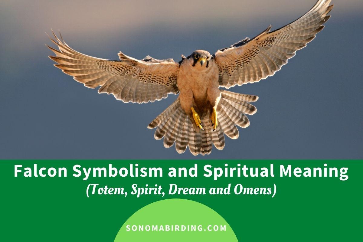 Falcon Symbolism