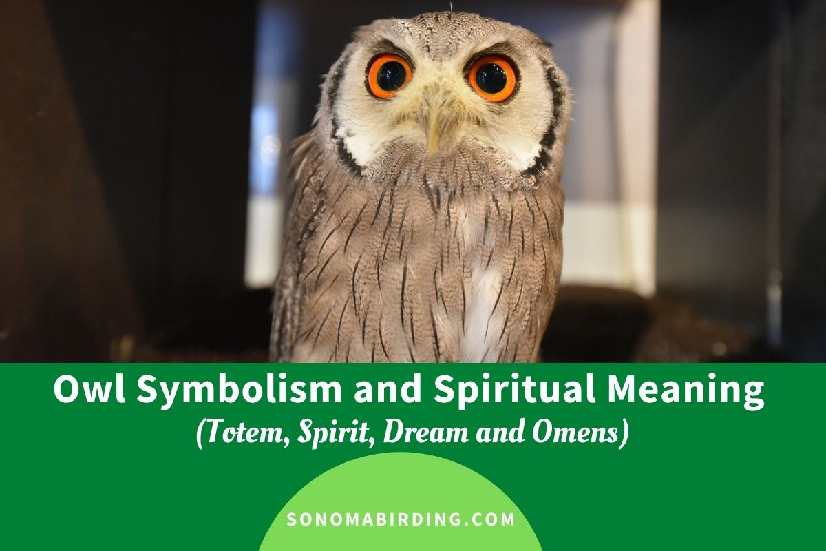Owl Symbolism and Spiritual Meaning