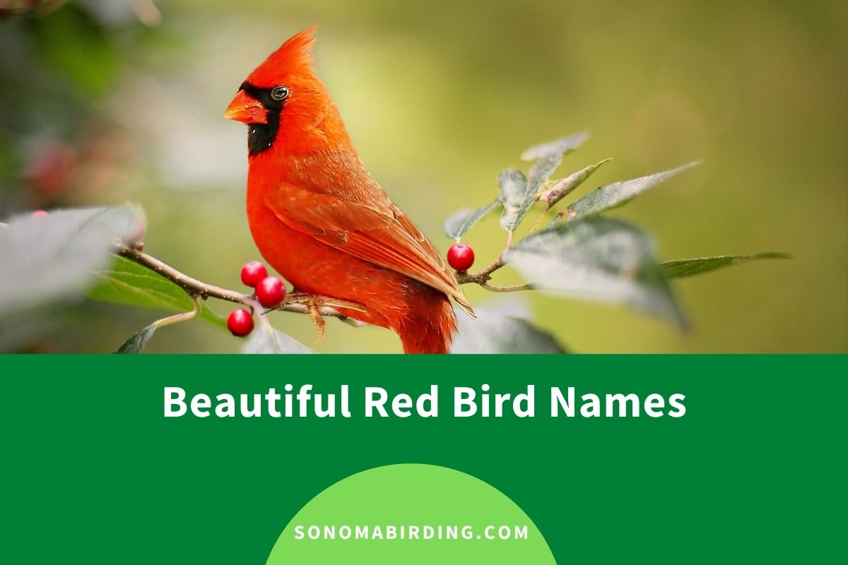Red Bird Names