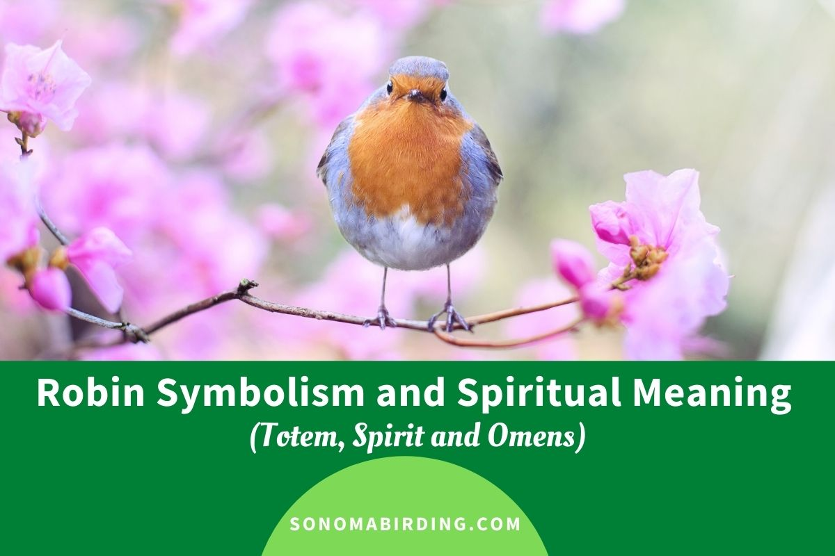 Robin Symbolism and Spiritual Meaning