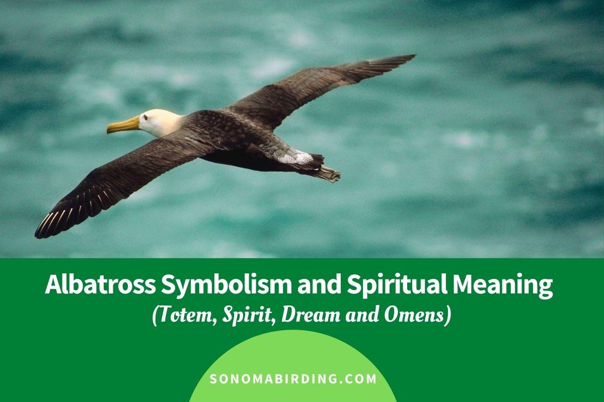 Albatross Symbolism