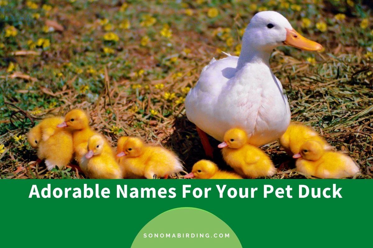 Duck Names