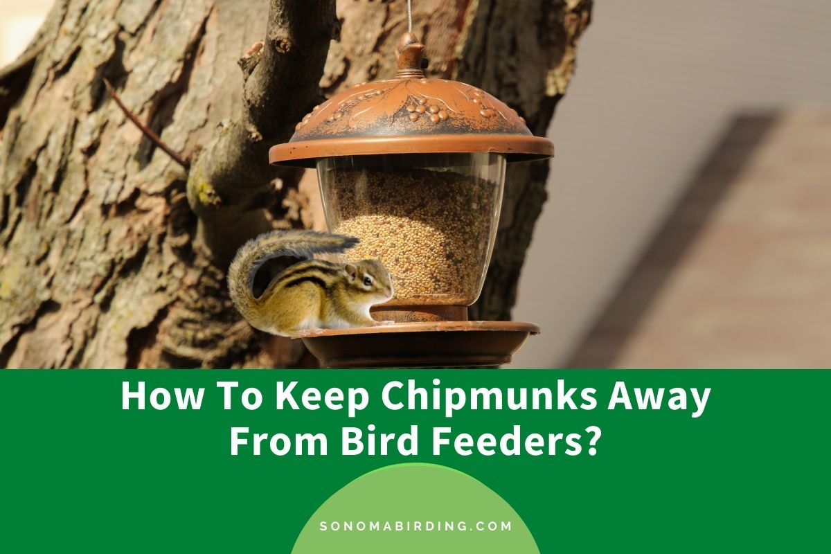 How To Keep Chipmunks Away From Bird Feeders