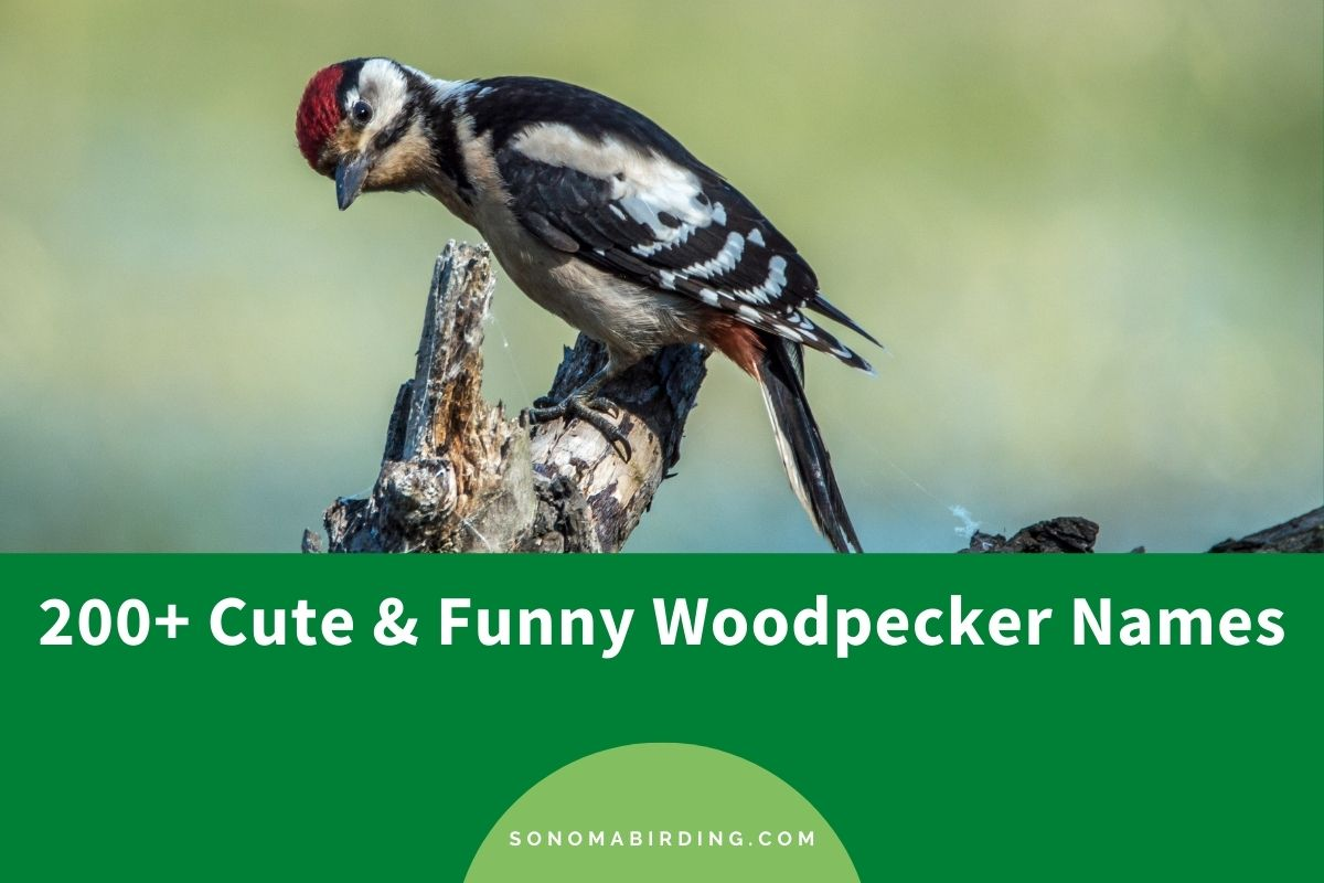 Woodpecker Names