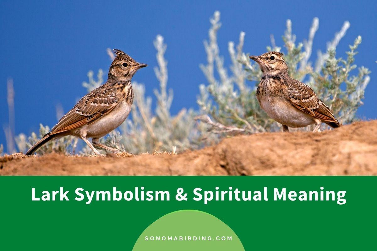 Lark Symbolism and Spiritual Meaning