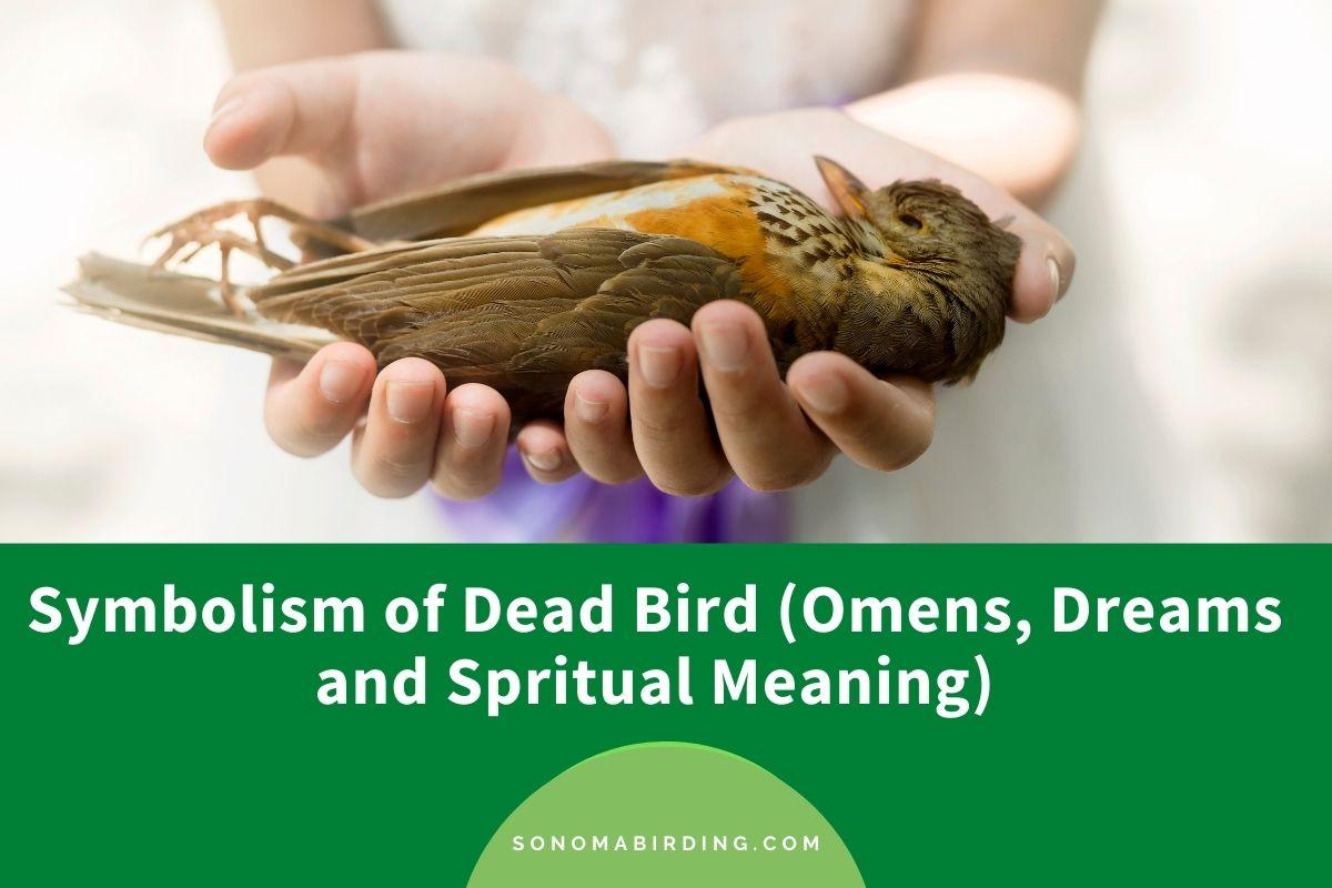 Dead Bird Symbolism