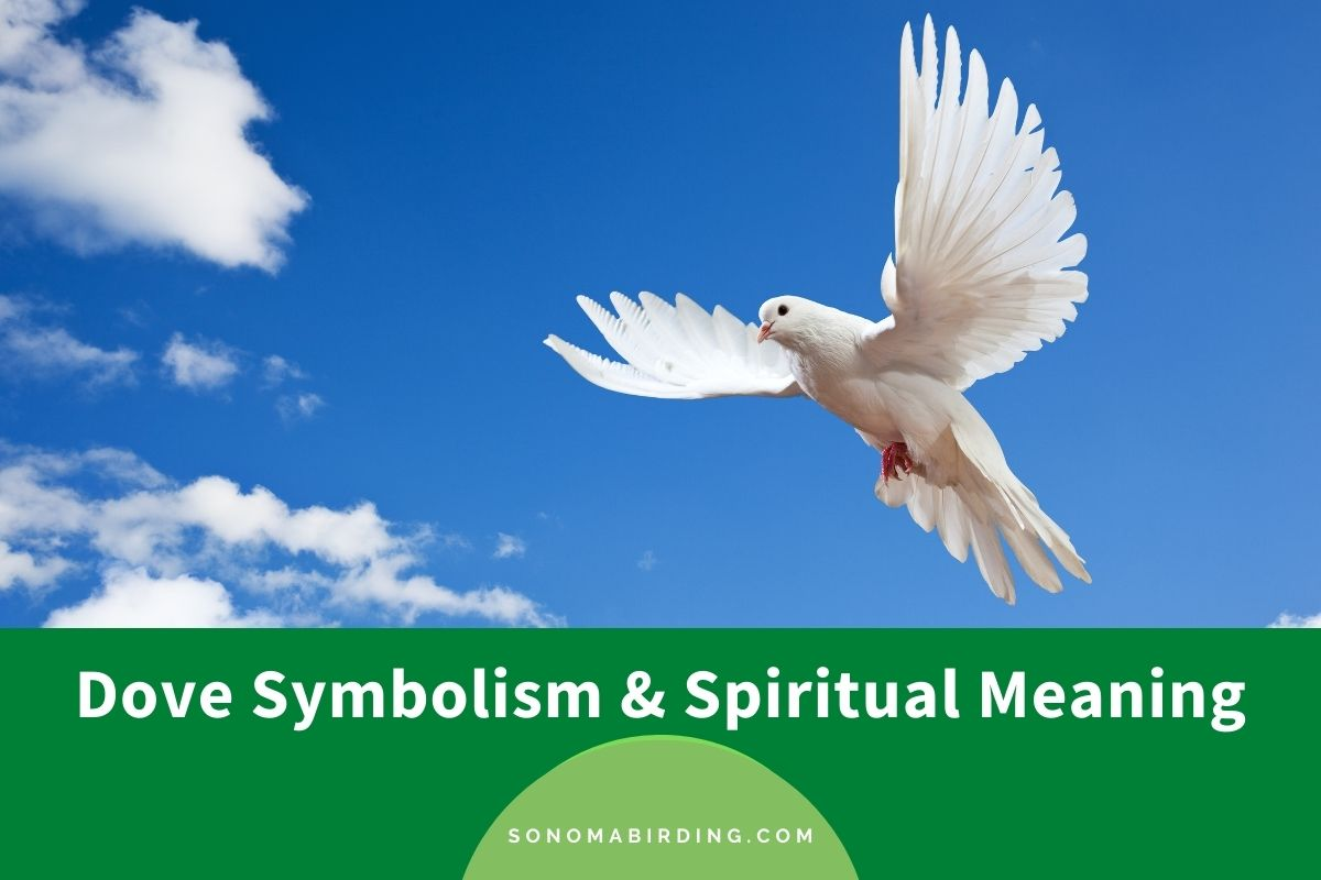 Dove Symbolism and Spiritual Meaning