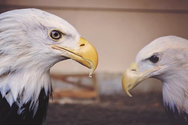 Dream of Eagles