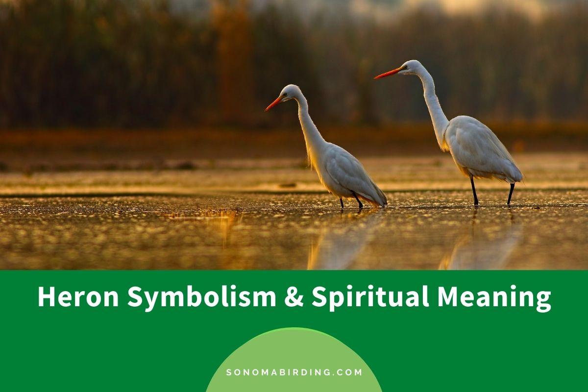 Heron Symbolism and Spiritual Meaning