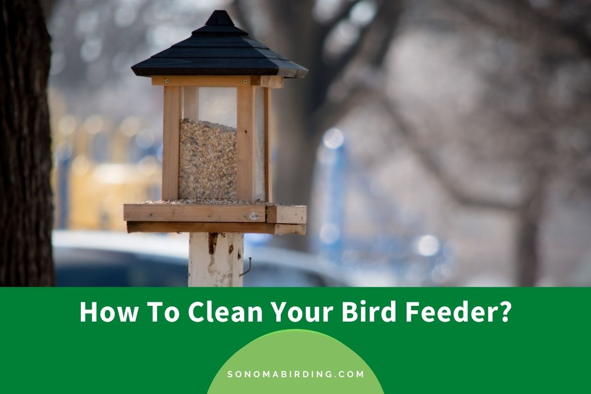 How To Clean Your Bird Feeder