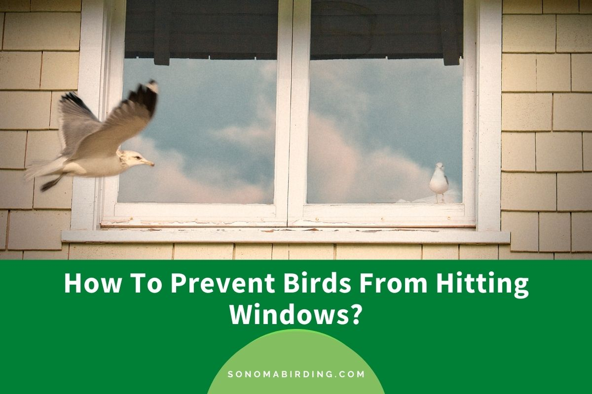 How To Prevent Birds From Hitting Windows