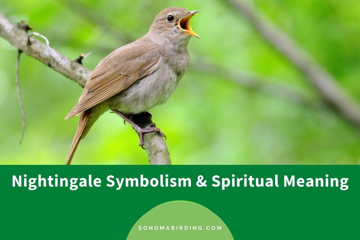 Nightingale symbolism and spiritual meaning