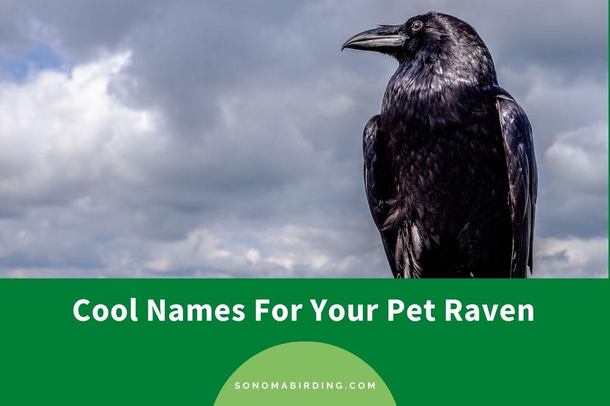 Raven Names