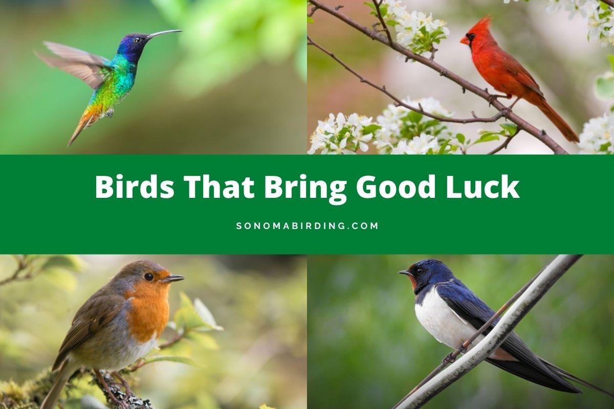 Birds that bring good luck