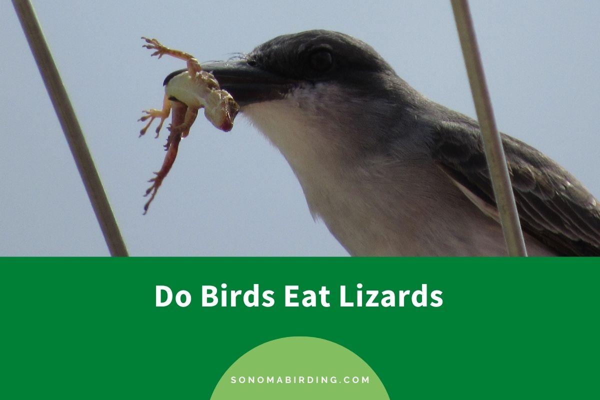 Do Birds Eat Lizards
