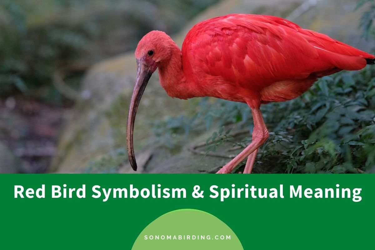 Red Bird Symbolism and Spiritual Meaning