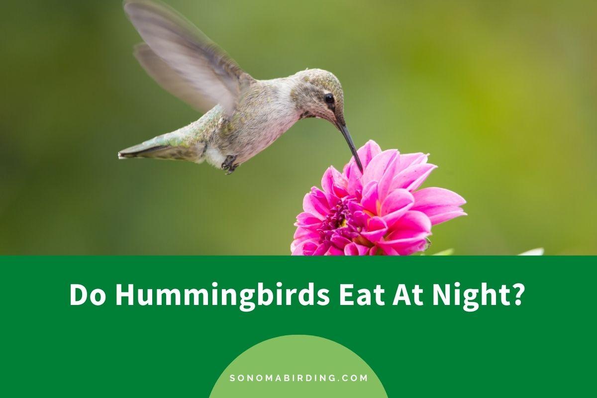 Do Hummingbirds Eat At Night