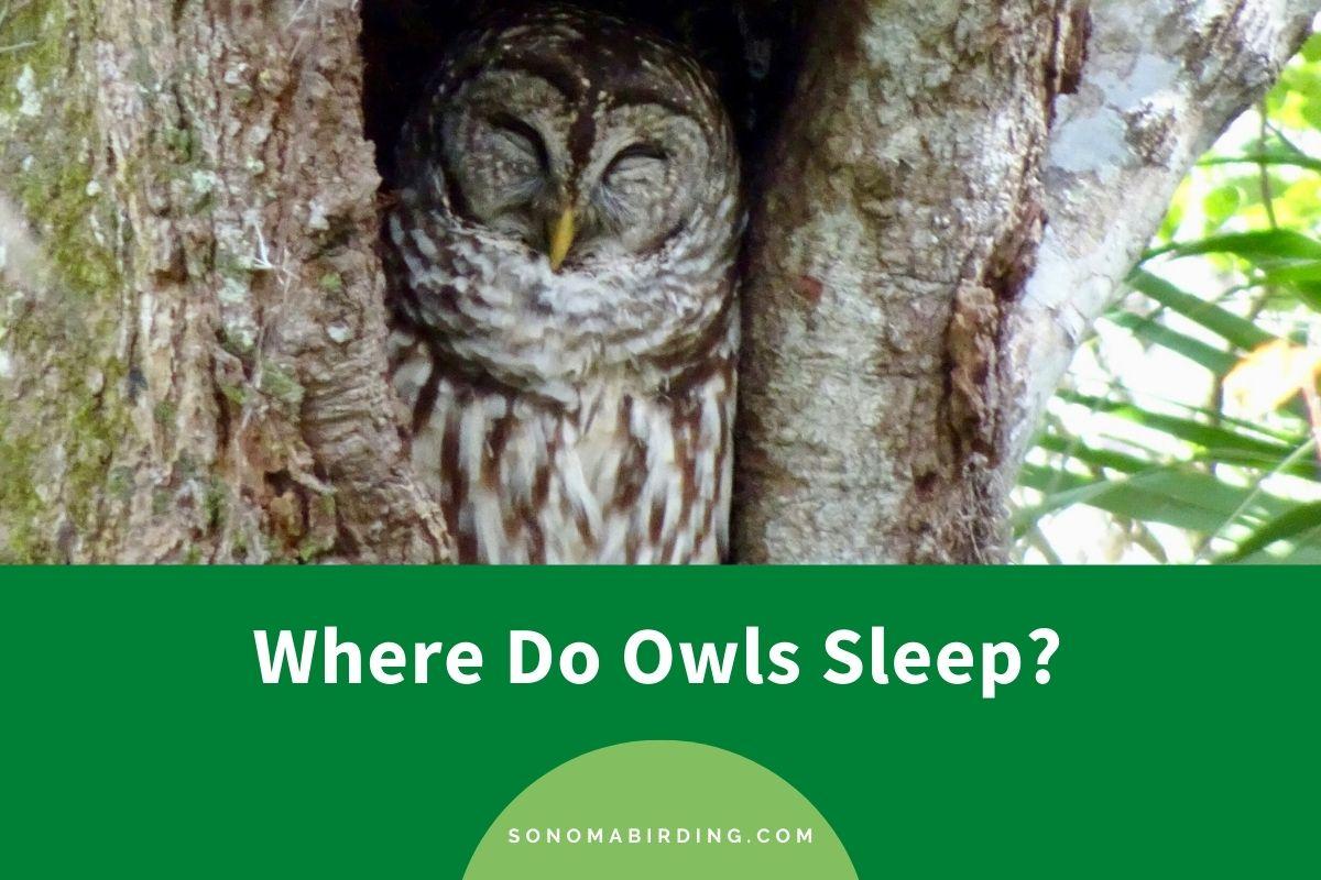 Where Do Owls Sleep